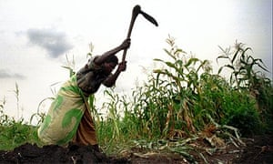 Malawi's green revolution | Katine | The Guardian