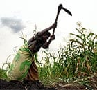 Working the land: a farmer in Malawi