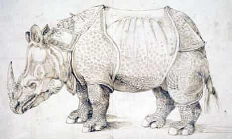 Detail from Albrecht Durer's etching of a rhinoceros (1498)