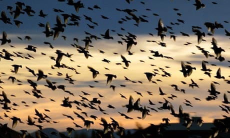 Why Are Poets So Fascinated With Birds Books The Guardian