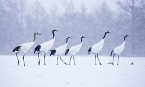 Margaret Atwood: act now to save our birds | Books | The Guardian