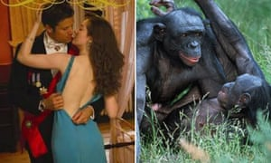 Mating humans and pygmy chimpanzees