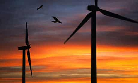 Red kites fly past wind turbines.