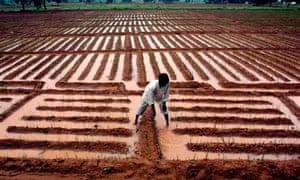 Indian man checks the onion seeds