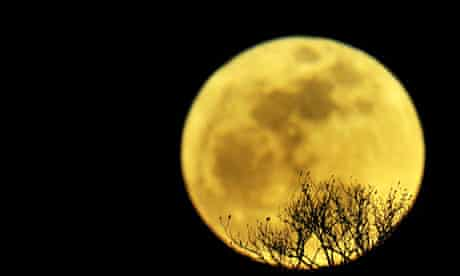 The moon rises above the branches of a tree