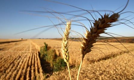 Brazil's Grain Production