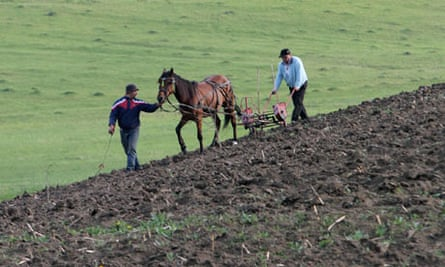 Romanian men use horses to plough the land