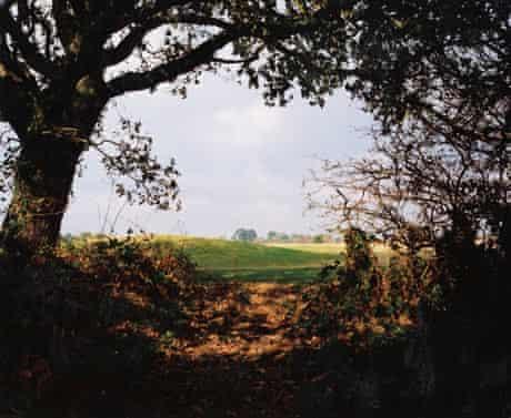 Richard Billingham's <em>Hedgerow (New Forest)</em>, 2003.