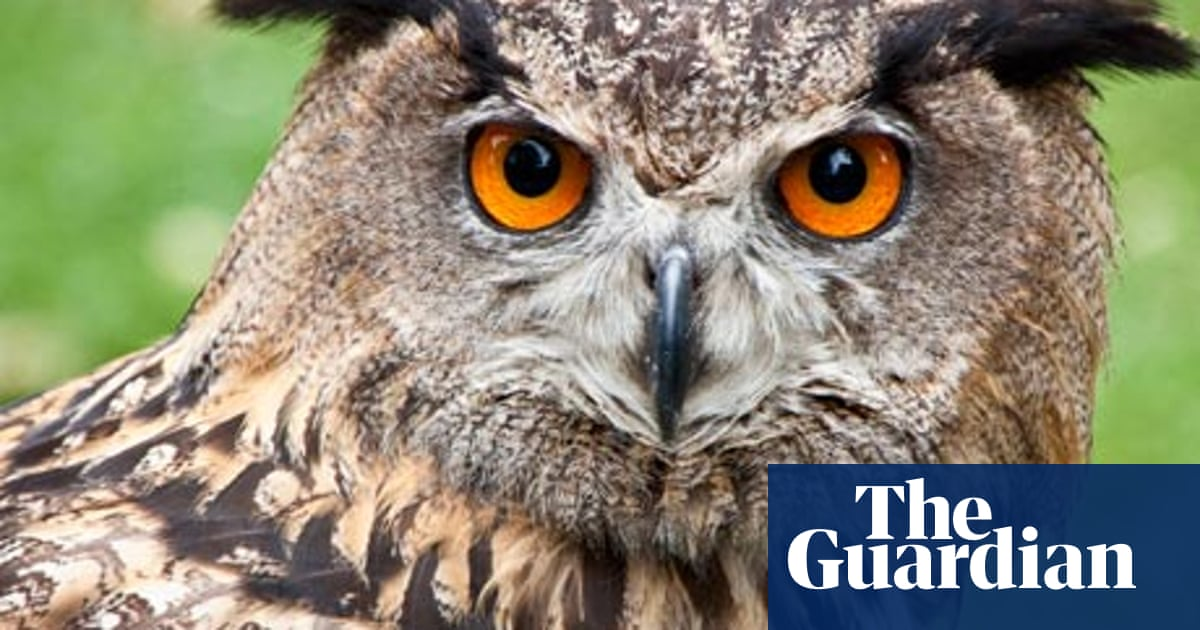 Night Owls May Face Special Challenges >> John Mullan S Ten Of The Best Owls Books The Guardian
