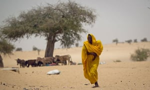 A Sahel woman walks after leaving the donkey she travelled on under the shade of a tree