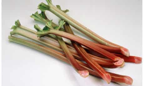 Several rhubarb sticks