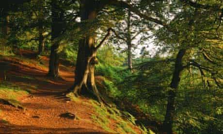 Wenlock Edge, near Alderley Edge, Cheshire.
