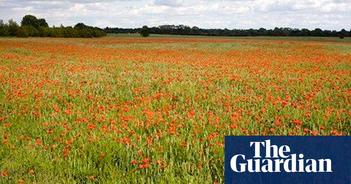Poem of the week: Returning, We Hear Larks by Isaac