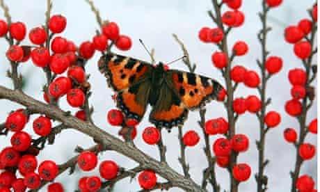 Butterfly in winter
