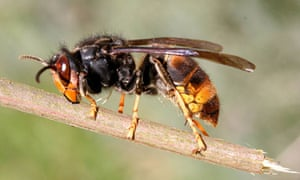 A wasp