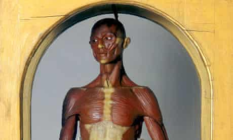 wax figure in Florence's La Specola zoological museum