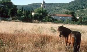 Meadow in Croatia