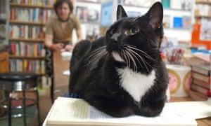 Cat in a Brooklyn bookshop