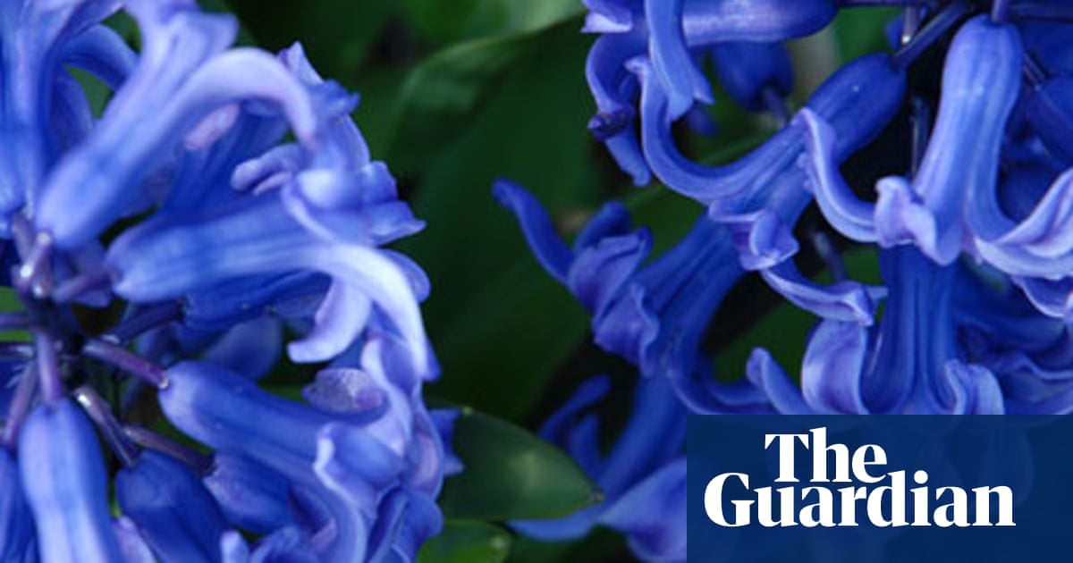 Poem of the week: two cinquains by Adelaide Crapsey | Books