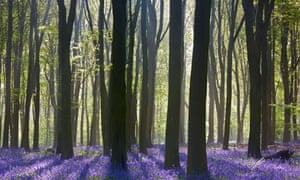 Sunlight streaming through the trees and bluebells