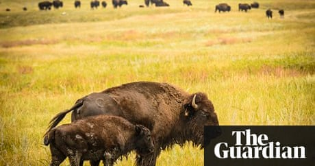 Butcher's Crossing by John Williams – review | Books | The