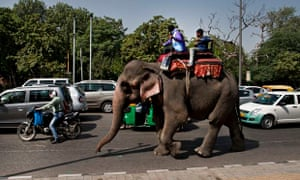 An elephant in the city