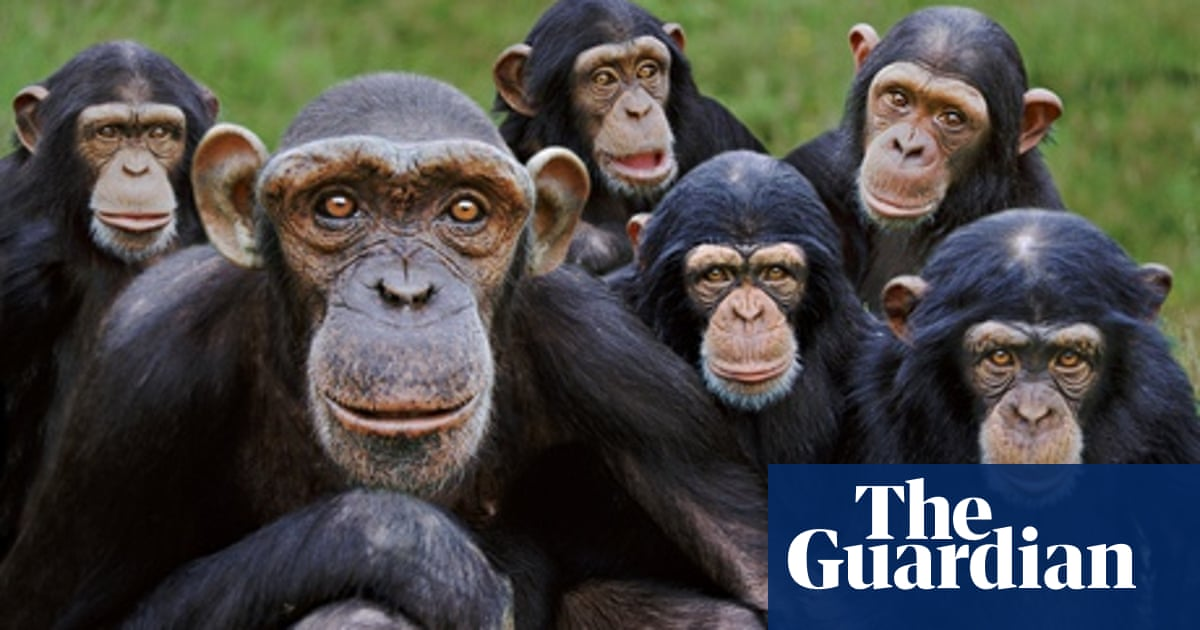 Ten of the best collective nouns | Books | The Guardian