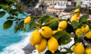 Beautifully written … a lemon tree on the Amalfi coast, Italy.