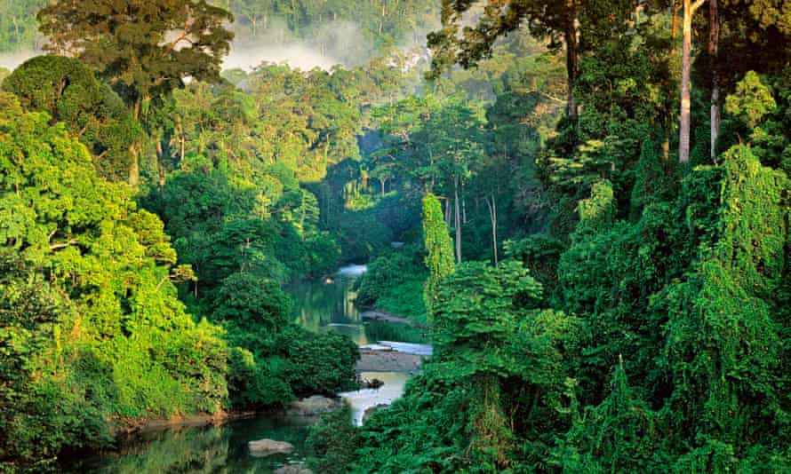 'Catling's themes are about forms of psychic and physical colonisation' … a rainforest in Borneo.