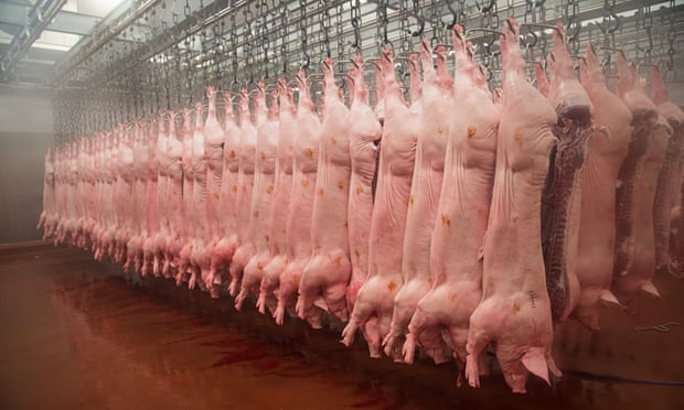 Pig carcasses hanging in an abattoir