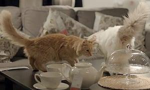 Ikea cats advert (2010)
