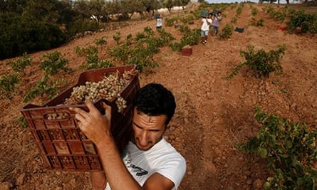 Workers carry crates filled with grapes on their shoulder at a vineyard in Keratea, east of Athens