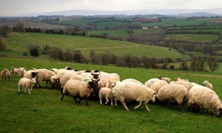 Lambing season at Great Tre-Rhew Farm in Abergavenney, Wales