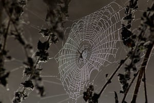 Nursery Rhymes: Dew drops are seen condensed on a spider's web