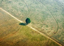 A single tree seen on land that was previously jungle in Brazil