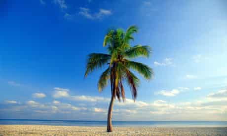 Beware the falling coconuts...