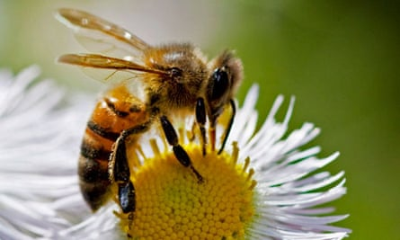 Professor of apiculture Norman Gary has spent his career studying tiny, honey-making musicians