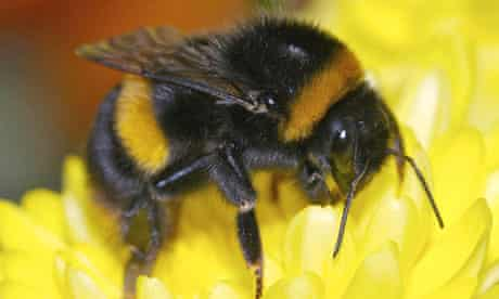 Bumblebee pollination is worth a vast amount to the economy
