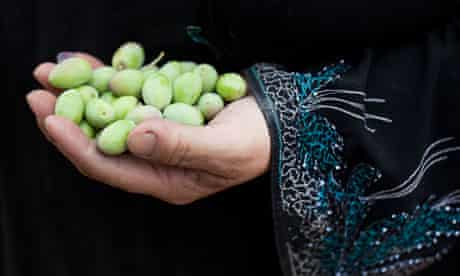 Olive harvest at the women-only Seer cooperative for olive oil production, Qalqilya in the West Bank
