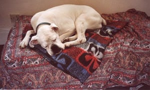 A sleeping dog: researchers investigated dogs' responses to sounds at night