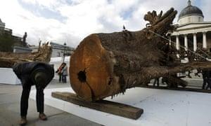"""Trafalgar Square, London : art piece  by Angela Palmer entitled """"Ghost Forest"""""""
