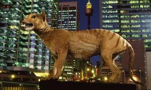 Extinct Tasmanian Wolf on Display in Sydney, Australia