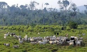 COP15 REDD Rainforest or rain forest  Jamanxim National Forest, state of Para, northern Brazil