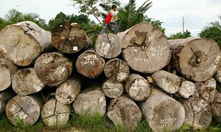 COP15 REDD rain forest or rainforest , Deforestation Continues In Sumatra