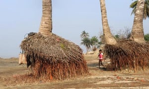 COP15 3C roots of palm trees exposed due to erosion on Ghoramara Island, in The Sundarbans