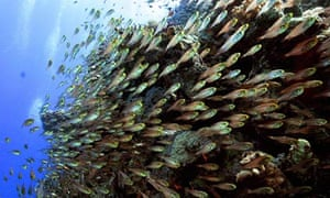 COP15 climate change and biodiversity : fishes swim over the coral reef at Sharm el-Sheikh in Egypt