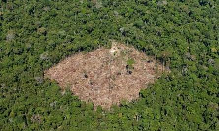 COP15 : REDD and deforestation in Brazil, Para state
