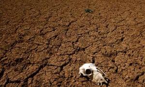 Animal skull lies on dried-up reservoir