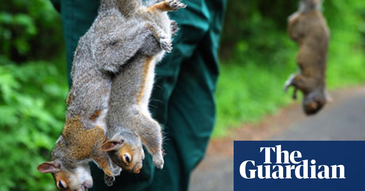 Squirrels in the garden: your deterrents   Life and style