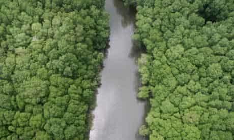 WWF Living Planet Report : Aerial view of mangrove forest, Costa Rica